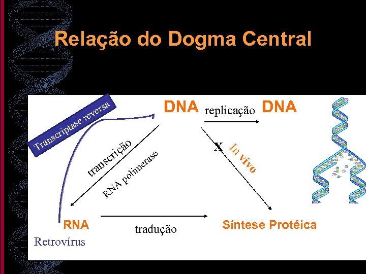 Relação do Dogma Central e tas s ver e DNA replicação a r NA