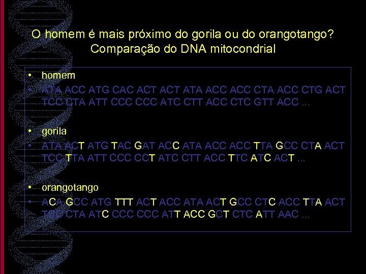 O homem é mais próximo do gorila ou do orangotango? Comparação do DNA mitocondrial