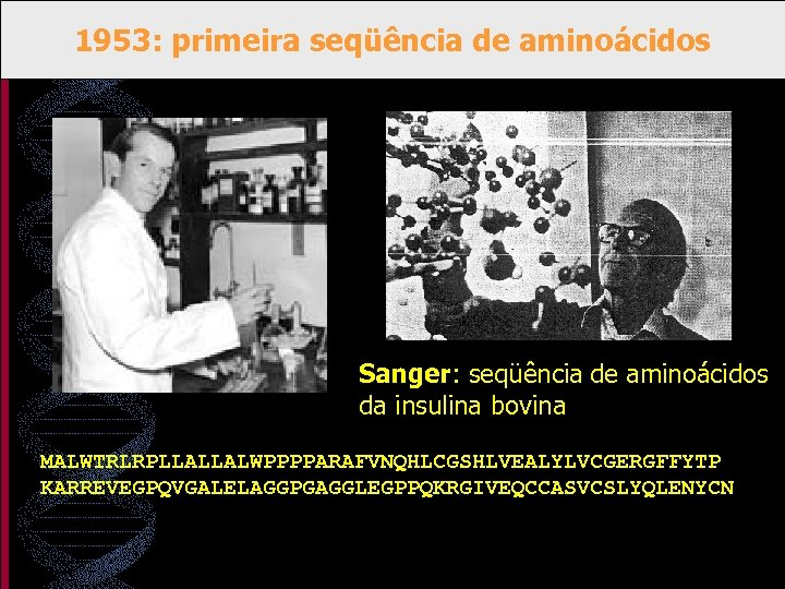 1953: primeira seqüência de aminoácidos Sanger: seqüência de aminoácidos da insulina bovina MALWTRLRPLLALLALWPPPPARAFVNQHLCGSHLVEALYLVCGERGFFYTP KARREVEGPQVGALELAGGPGAGGLEGPPQKRGIVEQCCASVCSLYQLENYCN
