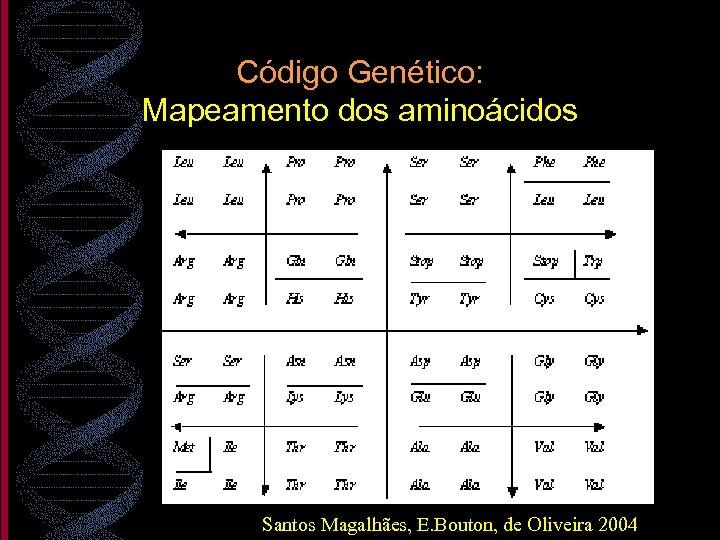 Código Genético: Mapeamento dos aminoácidos Santos Magalhães, E. Bouton, de Oliveira 2004