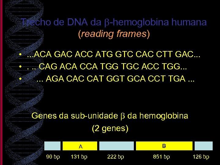Trecho de DNA da b-hemoglobina humana (reading frames) • . . . ACA GAC