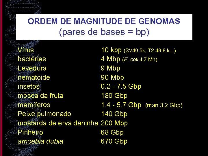 ORDEM DE MAGNITUDE DE GENOMAS (pares de bases = bp) Vírus bactérias Levedura nematóide