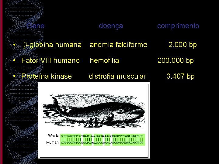 Gene doença • b-globina humana anemia falciforme • Fator VIII humano hemofilia • Proteína