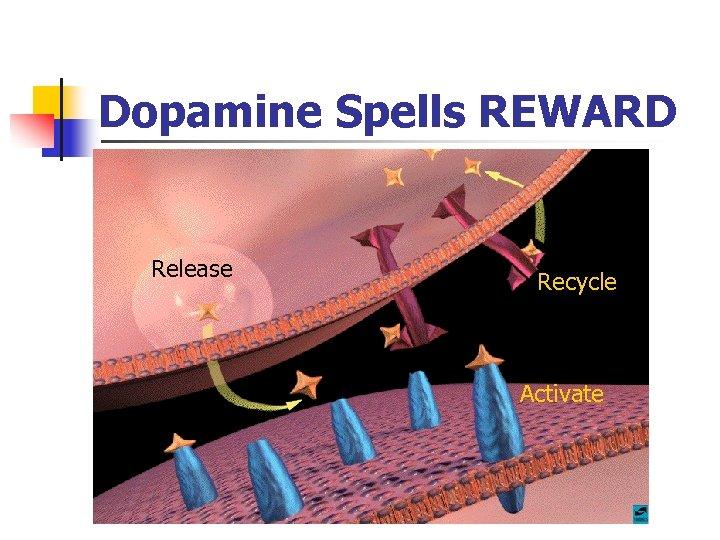 Dopamine Spells REWARD Release Recycle Activate