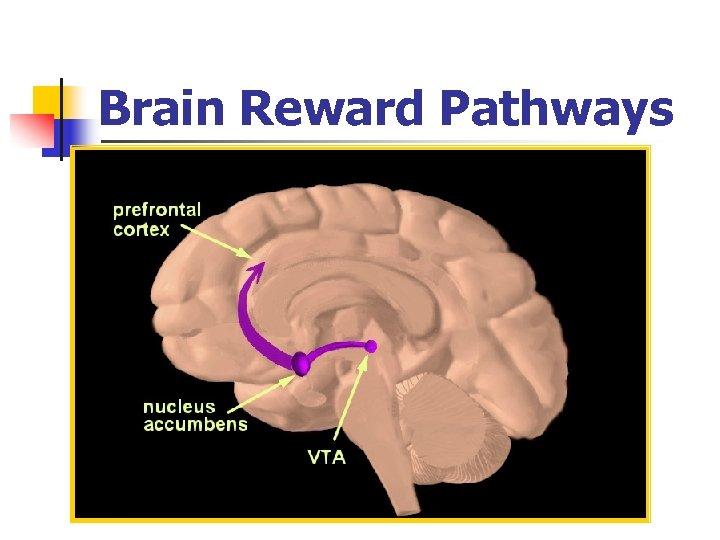 Brain Reward Pathways