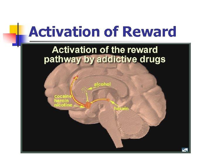 Activation of Reward