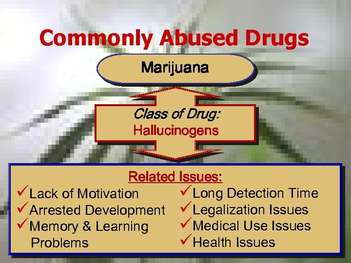 Commonly Abused Drugs Marijuana Class of Drug: Hallucinogens Related Issues: üLong Detection Time üLack