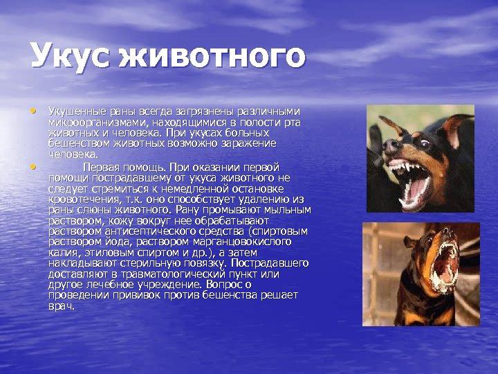 Укус животного • Укушенные раны всегда загрязнены различными • микроорганизмами, находящимися в полости рта