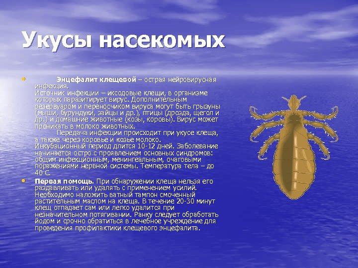 Укусы насекомых • • Энцефалит клещевой – острая нейровирусная инфекция. Источник инфекции – иксодовые