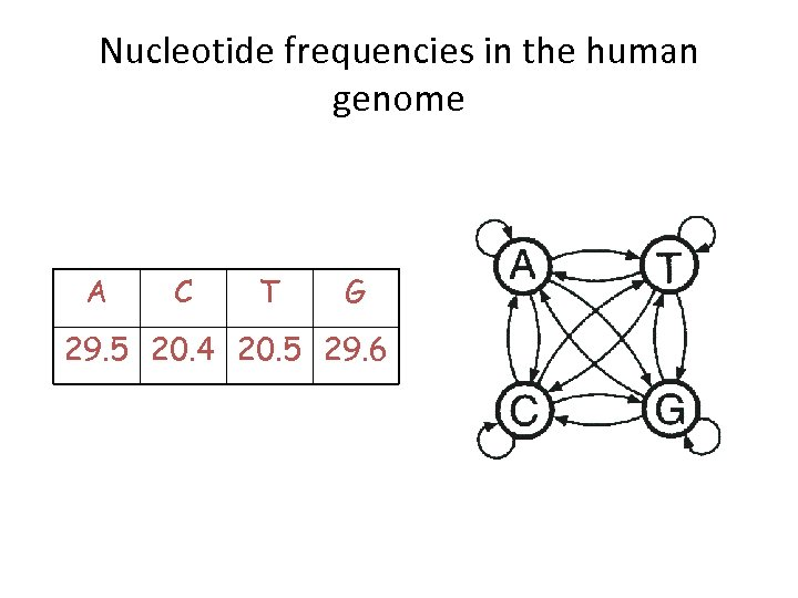 Nucleotide frequencies in the human genome A C T G 29. 5 20. 4