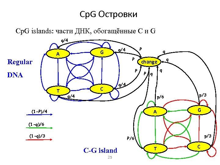 Cp. G Островки Cp. G islands: части ДНК, обогащённые C и G q/4 A