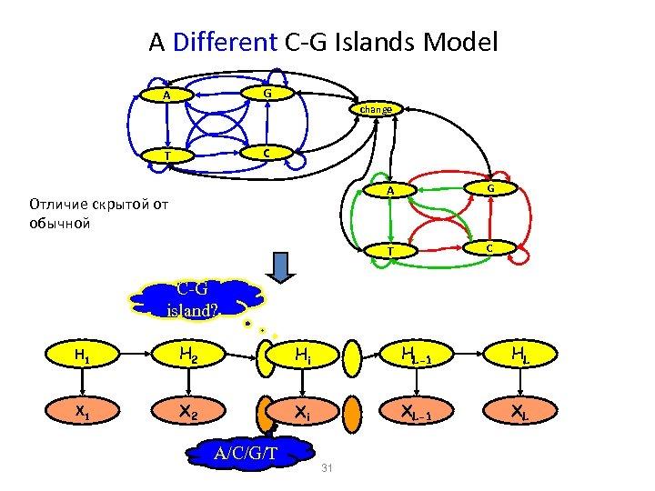 A Different C-G Islands Model A G T C change A T Отличие скрытой