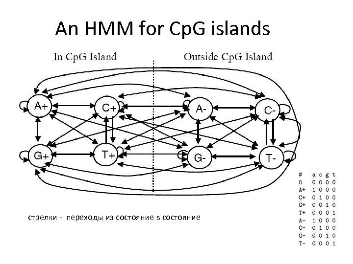 An HMM for Cp. G islands стрелки - переходы из состояние в состояние