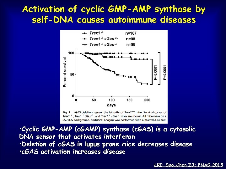 Activation of cyclic GMP-AMP synthase by self-DNA causes autoimmune diseases • Cyclic GMP-AMP (c.
