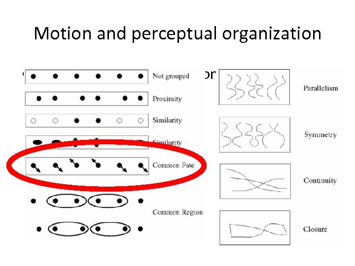 Motion and perceptual organization • Sometimes, motion is the only cue