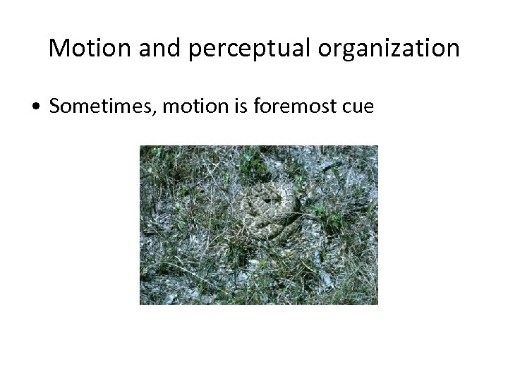 Motion and perceptual organization • Sometimes, motion is foremost cue