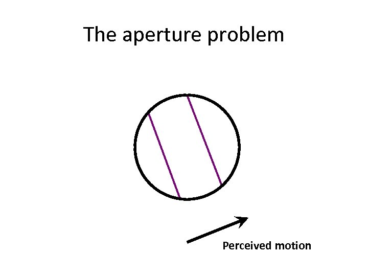 The aperture problem Perceived motion
