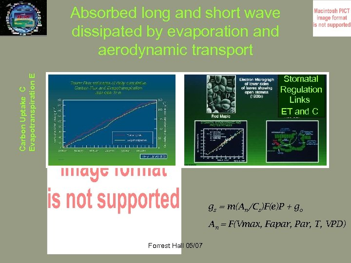 Carbon Uptake C Evapotranspiration E Absorbed long and short wave dissipated by evaporation and