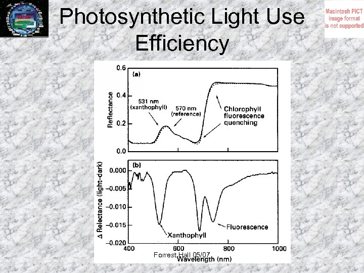 Photosynthetic Light Use Efficiency Forrest Hall 05/07