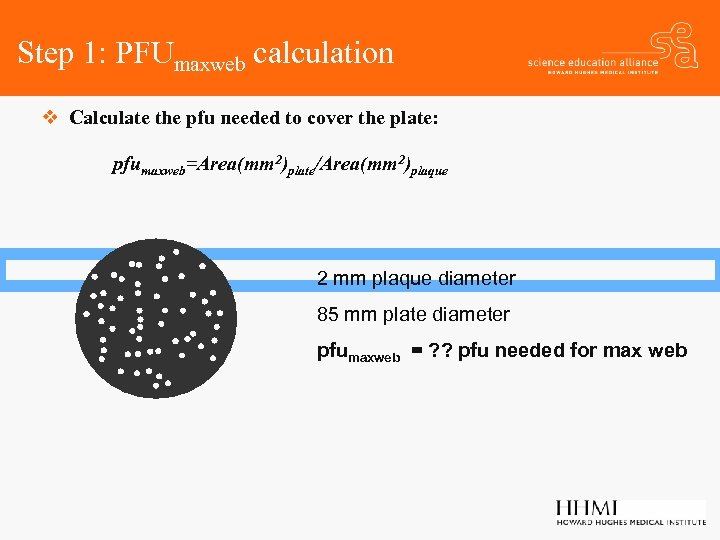 Step 1: PFUmaxweb calculation v Calculate the pfu needed to cover the plate: pfumaxweb=Area(mm