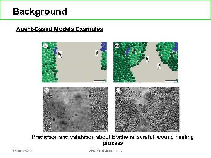 Background Agent-Based Models Examples Prediction and validation about Epithelial scratch wound healing process 15