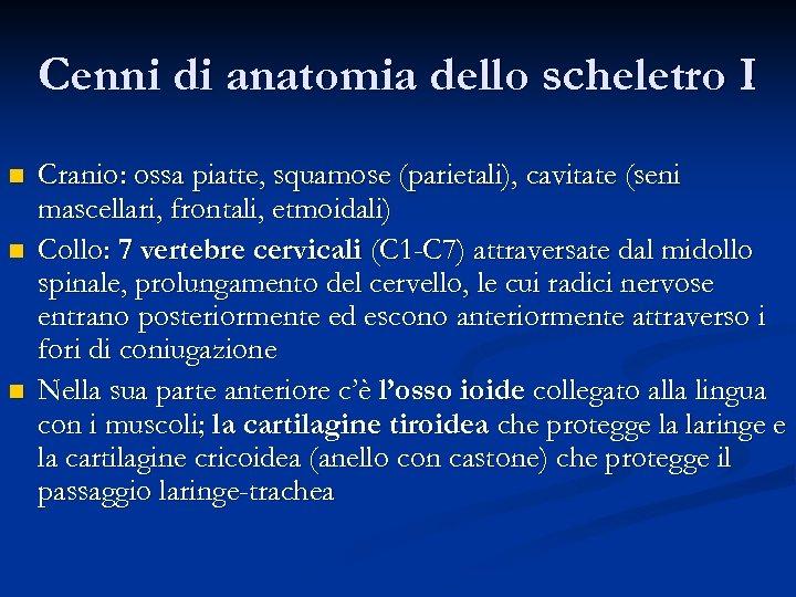 Cenni di anatomia dello scheletro I n n n Cranio: ossa piatte, squamose (parietali),