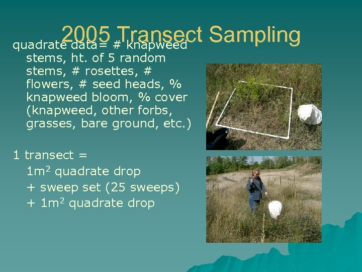 2005 # knapweed Sampling Transect quadrate data= stems, ht. of 5 random stems, #