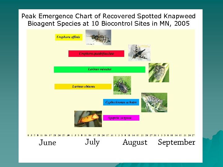 Peak Emergence Chart of Recovered Spotted Knapweed Bioagent Species at 10 Biocontrol Sites in