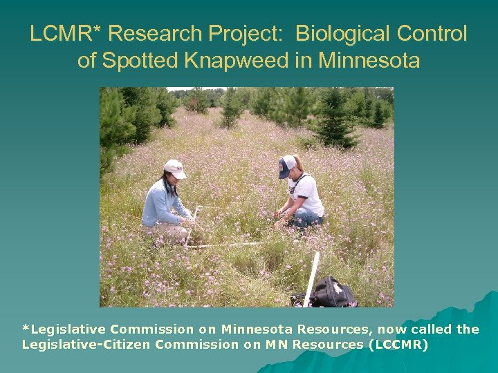 LCMR* Research Project: Biological Control of Spotted Knapweed in Minnesota *Legislative Commission on Minnesota