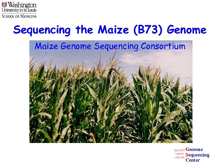Sequencing the Maize (B 73) Genome Maize Genome Sequencing Consortium Genome Sequencing Center