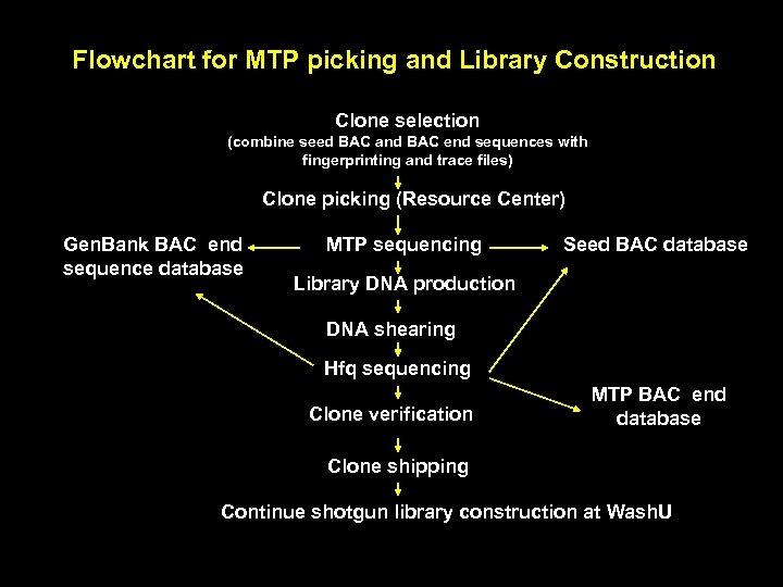 Flowchart for MTP picking and Library Construction Clone selection (combine seed BAC and BAC