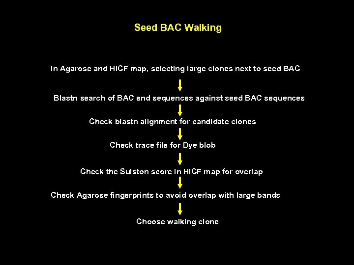 Seed BAC Walking In Agarose and HICF map, selecting large clones next to seed