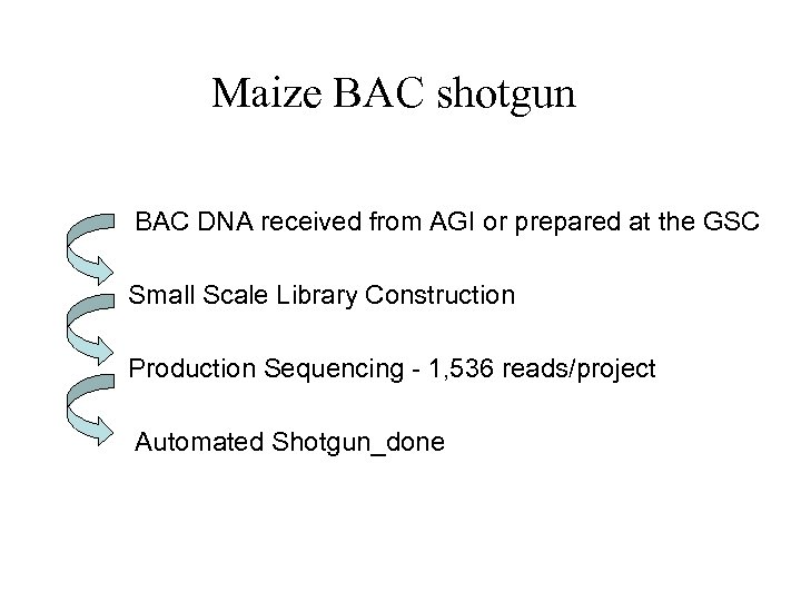 Maize BAC shotgun BAC DNA received from AGI or prepared at the GSC Small