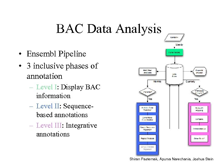 BAC Data Analysis • Ensembl Pipeline • 3 inclusive phases of annotation – Level