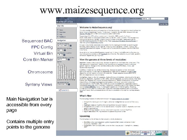 www. maizesequence. org Sequenced BAC FPC Contig Virtual Bin Core Bin Marker Chromosome Synteny
