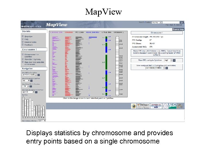 Map. View Displays statistics by chromosome and provides entry points based on a single