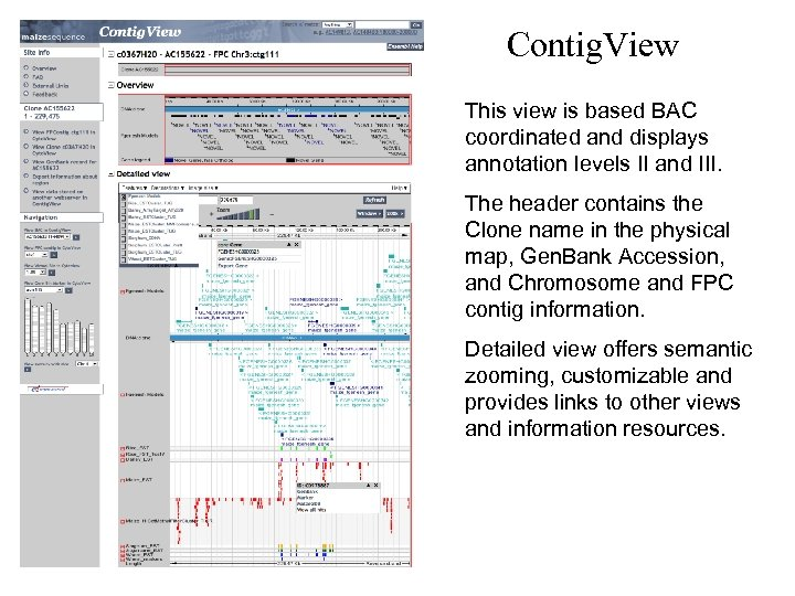 Contig. View This view is based BAC coordinated and displays annotation levels II and