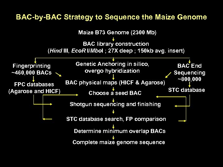 BAC-by-BAC Strategy to Sequence the Maize Genome Maize B 73 Genome (2300 Mb) BAC