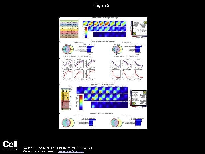 Figure 3 Neuron 2014 83, 69 -86 DOI: (10. 1016/j. neuron. 2014. 05. 035)