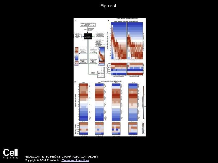 Figure 4 Neuron 2014 83, 69 -86 DOI: (10. 1016/j. neuron. 2014. 05. 035)