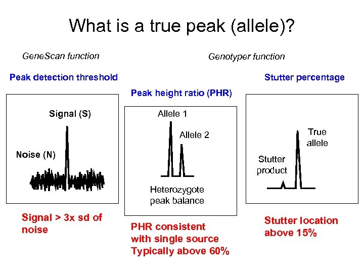 What is a true peak (allele)? Gene. Scan function Genotyper function Peak detection threshold