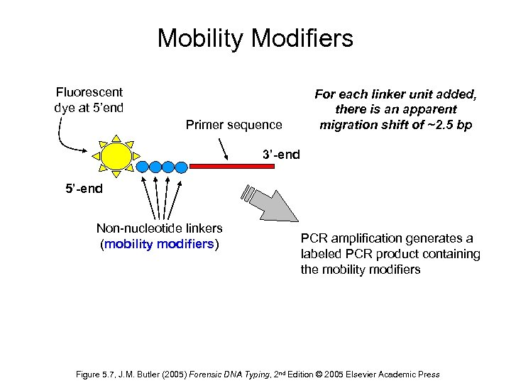 Mobility Modifiers Fluorescent dye at 5'end Primer sequence For each linker unit added, there
