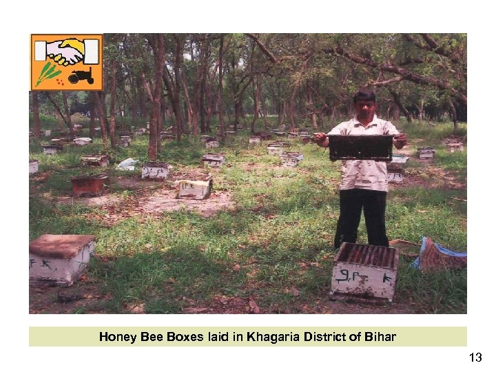 Honey Bee Boxes laid in Khagaria District of Bihar 13