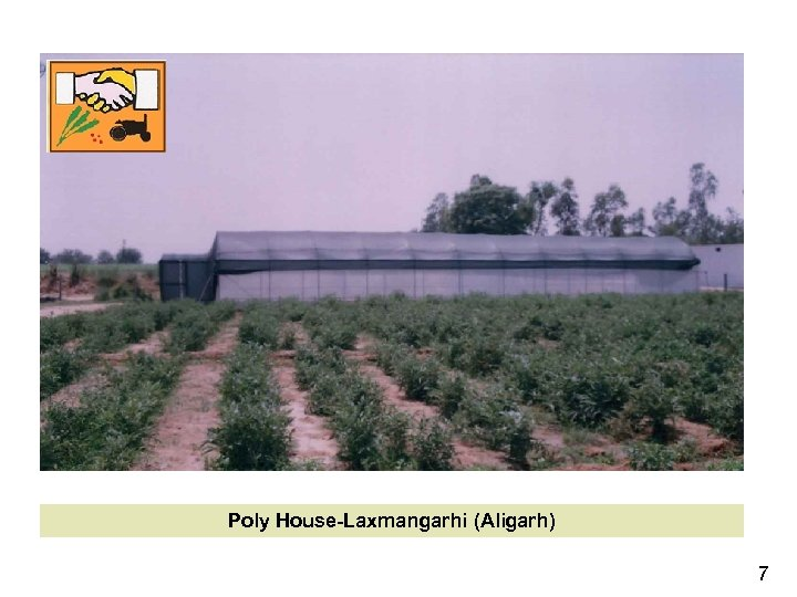 Poly House-Laxmangarhi (Aligarh) 7