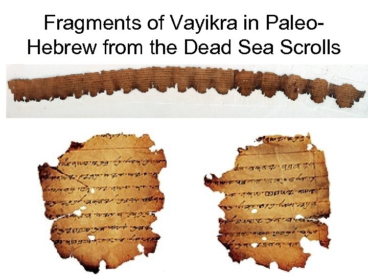 Fragments of Vayikra in Paleo. Hebrew from the Dead Sea Scrolls