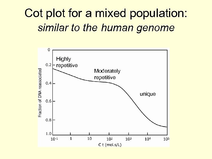 Cot plot for a mixed population: similar to the human genome Highly repetitive Moderately