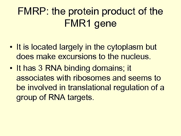 FMRP: the protein product of the FMR 1 gene • It is located largely
