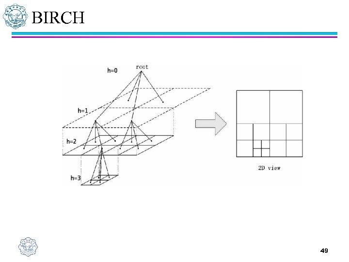 BIRCH 49