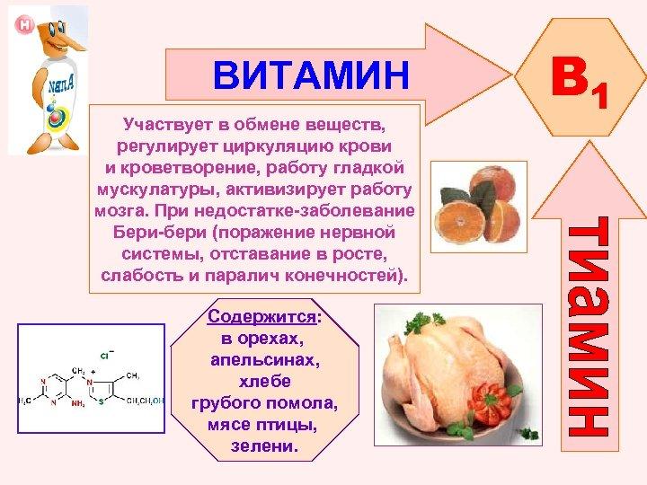 ВИТАМИН Участвует в обмене веществ, регулирует циркуляцию крови и кроветворение, работу гладкой мускулатуры, активизирует