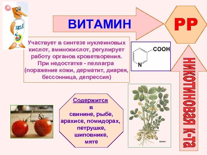 ВИТАМИН Участвует в синтезе нуклеиновых кислот, аминокислот, регулирует работу органов кроветворения. При недостатке -